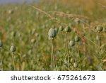 poppy field | Shutterstock . vector #675261673