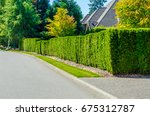 nicely trimmed green fence.... | Shutterstock . vector #675312787