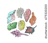 set of seashells on white...   Shutterstock . vector #675320203