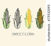 vector illustration. sketch...   Shutterstock .eps vector #675532093