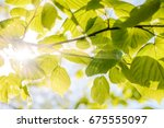 bright leaves in the back light ... | Shutterstock . vector #675555097