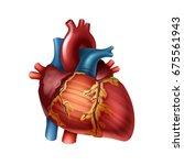 vector red healthy human heart... | Shutterstock .eps vector #675561943