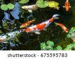 colorful decorative fish float... | Shutterstock . vector #675595783