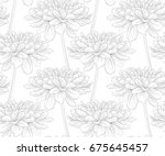 beautiful black and white... | Shutterstock . vector #675645457