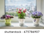 house plants on window. violet  ... | Shutterstock . vector #675786907