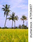 paddy field with coconut tree... | Shutterstock . vector #675926857
