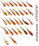 Set Of Koi Fish Isolated On...