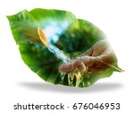 forest is water concept  double ... | Shutterstock . vector #676046953