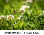 close up of wild bee in mid air ... | Shutterstock . vector #676085533