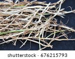 numerous couch grass  elymus... | Shutterstock . vector #676215793