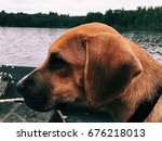black mouth cur puppy | Shutterstock . vector #676218013