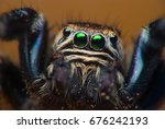 Jumping Spider Face Close Up. ...