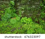 various type of plant in the... | Shutterstock . vector #676323097