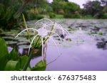 White Flower Beside Lotus Pond.
