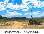 Small photo of Aloe secundiflora plant by a dirt path and a busy highway(left hand side) in the Kenyan countryside of the Rift Valley Province