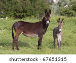 Two Donkeys  Mother And A Cub...