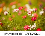 colorful summer flowers... | Shutterstock . vector #676520227