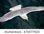 seagul flying over the sea | Shutterstock . vector #676577023