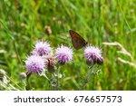 Meadow Brown Butterfly Taking...