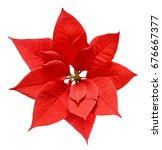 red christmas poinsettia flower ... | Shutterstock . vector #676667377