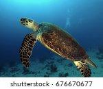 big turtle                      ...   Shutterstock . vector #676670677