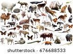 collection of different birds ... | Shutterstock . vector #676688533