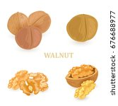 collection groups of walnuts... | Shutterstock .eps vector #676688977
