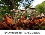 magic mushrooms growing wild in ...   Shutterstock . vector #676725007