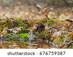 wild birds among autumn fallen... | Shutterstock . vector #676759387