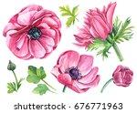 set flowers anemones and... | Shutterstock . vector #676771963