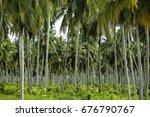 coconut tree plantation. | Shutterstock . vector #676790767