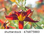 flowering daylily flowers ... | Shutterstock . vector #676875883