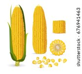 Vector Illustration Of Corn ...
