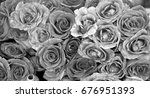 monochrome roses background. | Shutterstock . vector #676951393