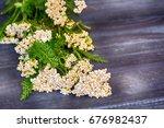 yarrow flowers on dark blue... | Shutterstock . vector #676982437