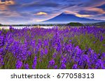 fuji mountain and lavender... | Shutterstock . vector #677058313