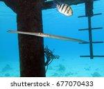 long fish under the bridge   Shutterstock . vector #677070433
