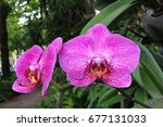 Orchid Pink Flowers