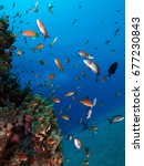 color fishes in the red sea     ... | Shutterstock . vector #677230843