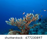 coral tree and color fishes     ...   Shutterstock . vector #677230897