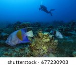 beautiful fishes and a diver    ...   Shutterstock . vector #677230903
