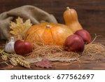 autumn concept of pumpkins  red ... | Shutterstock . vector #677562697