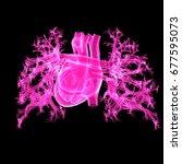 human heart posterior view 3d... | Shutterstock . vector #677595073