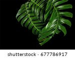 exotic hybrid philodendron leaf ... | Shutterstock . vector #677786917