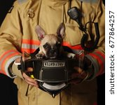 puppy in firefighter helmet | Shutterstock . vector #677864257