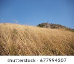 Small photo of A dry grassland against the wind