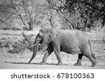 Desert Elephants Are Not A...