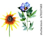 wildflower sunflower flower in...   Shutterstock . vector #678107683