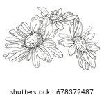hand drawn flower  chamomile... | Shutterstock .eps vector #678372487