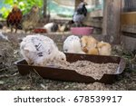 chicken on the farm. slovakia | Shutterstock . vector #678539917